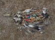 midway albatros pollution plastique