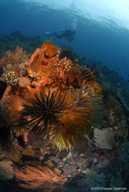 Sponges and feather stars